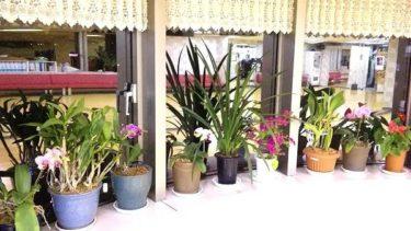 スタジオの観葉植物。。。