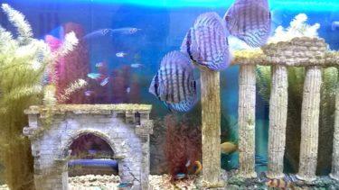 スタジオの熱帯魚たち。。。