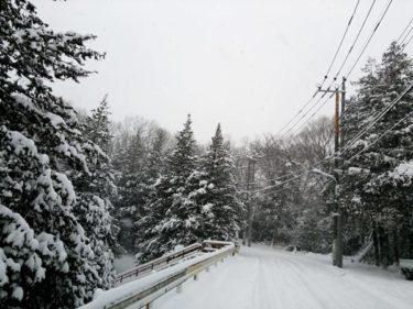 大雪だぁ~!。。。