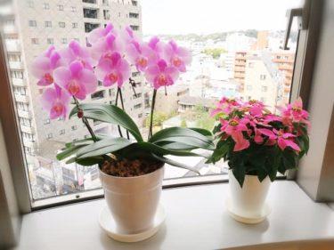 ピンクのお花たち♪。。。