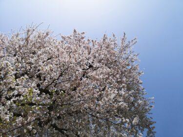 春なんだねー。。。